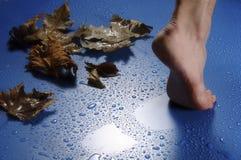 Piede e foglie Fotografie Stock Libere da Diritti