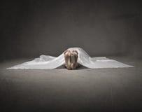 Piede morto della donna Fotografie Stock Libere da Diritti