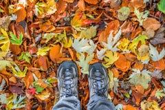 Piedi con le scarpe di camminata su un fondo delle foglie autunnali variopinte cadute, passeggiata della foresta fotografia stock libera da diritti