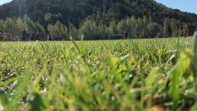 A piedi del campo di erba fotografia stock libera da diritti