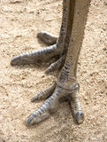 Piedi del Emu Immagine Stock