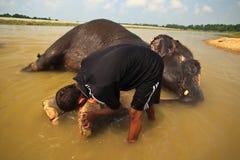 Piedi dell'elefante di sfregatura dell'uomo in fiume nel Nepal Fotografia Stock