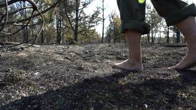 Piedi dell'uomo che camminano dalla foresta bruciata, tempo di siccità del dangeroud, cenere, catactrophe di disastro di ecologia stock footage