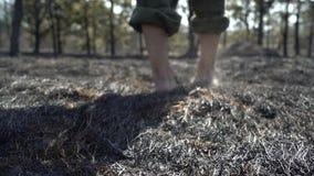 Piedi dell'uomo che camminano dalla foresta bruciata, tempo di siccit? del dangeroud, cenere, catactrophe di disastro di ecologia stock footage