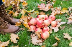 Piedi della donna in stivali con le mele e le foglie di autunno Immagine Stock