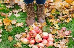 Piedi della donna in stivali con le mele e le foglie di autunno Fotografie Stock Libere da Diritti