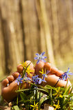 Piedi della donna tenera a piedi nudi in i fiori di primavera Fotografia Stock