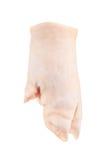 Piedi di maiale su un fondo bianco Fotografia Stock Libera da Diritti