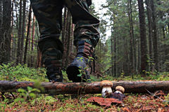 Piedi nella foresta di autunno delle scarpe Immagini Stock Libere da Diritti