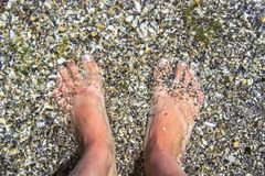 Piedi nudi del ` s della donna coperti di sabbia sulla spiaggia fotografie stock libere da diritti