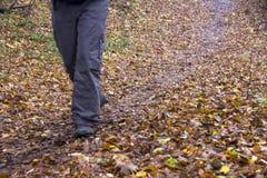 Piedi in scarpe su un sentiero nel bosco Immagine Stock