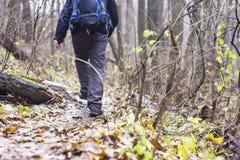 Piedi in scarpe su un sentiero nel bosco Immagini Stock