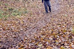 Piedi in scarpe su un sentiero nel bosco Fotografie Stock Libere da Diritti