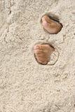 Piedi sotto la sabbia Fotografia Stock Libera da Diritti