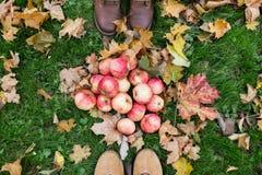 Piedi in stivali con le mele e le foglie di autunno Immagine Stock