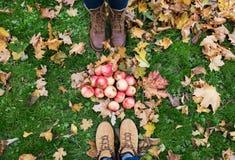 Piedi in stivali con le mele e le foglie di autunno Fotografia Stock