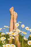 Piedini della donna con i fiori di estate o della primavera Fotografie Stock