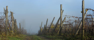 Piedmont Vineyards auttumn Royalty Free Stock Photo