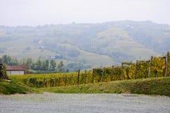 Piedmont vingårdar som producerar alta Langa Spumante, Italien Arkivfoto