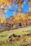 Piedra aislada y un panorama otoñal en el behi italiano de las montañas Foto de archivo libre de regalías