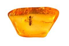 Piedra ambarina báltica imagen de archivo libre de regalías