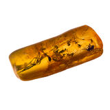Piedra ambarina báltica foto de archivo