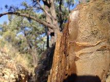 Piedra arenisca Ridge imagen de archivo libre de regalías