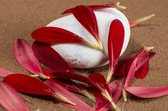 Piedra blanca con los pétalos de Gerber Fotografía de archivo libre de regalías