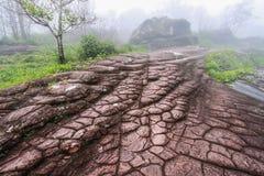 Piedra como piel del cocodrilo Imagen de archivo