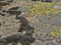 Piedra con el liquen Foto de archivo libre de regalías