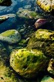 Piedra con el liquen en agua Fotos de archivo
