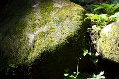 Piedra con el musgo Imagen de archivo libre de regalías