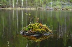 Piedra con el musgo y las hojas dentro del r?o foto de archivo libre de regalías