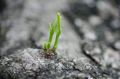 Piedra con los lanzamientos verdes Fotografía de archivo