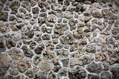 Piedra coralina fotos de archivo
