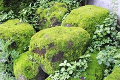 Piedra cubierta con el musgo Foto de archivo