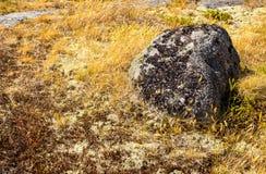 Piedra cubierta de musgo en hierba amarilla Imágenes de archivo libres de regalías