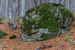 Piedra cubierta de musgo vieja en madera Foto de archivo