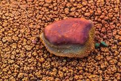Piedra cubierta en el primer de Crystal Geyser Utah de las bacterias Imagen de archivo