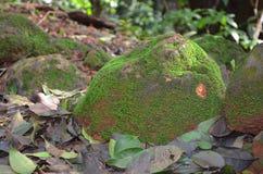 Piedra de las algas Imagen de archivo libre de regalías