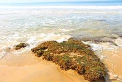 Piedra de las algas El Océano Índico Imagenes de archivo