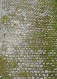 Piedra del adoquín con la opinión del pájaro del top del musgo Imagen de archivo