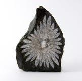 Piedra del crisantemo Fotos de archivo libres de regalías