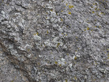Piedra del granito con el musgo Fotografía de archivo