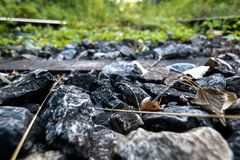 Piedra del primer de un carril abandonado en el bosque Fotos de archivo libres de regalías