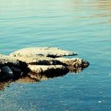 Piedra del río Imagen de archivo libre de regalías