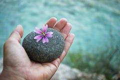 Piedra del río a disposición con la flor del malva foto de archivo