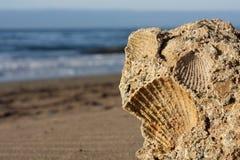 Piedra del shell Foto de archivo