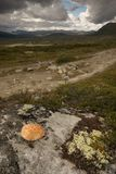 piedra Dovrefjell-roja Fotos de archivo libres de regalías