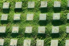 Piedra e hierba del modelo Imagen de archivo